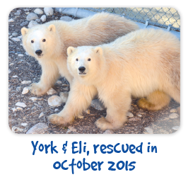 York-Eli-rescured in Oct 2015